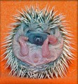 Baby Hedgehog Anus